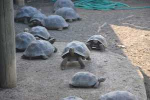 m_Galapagos (287) centre repro tortues